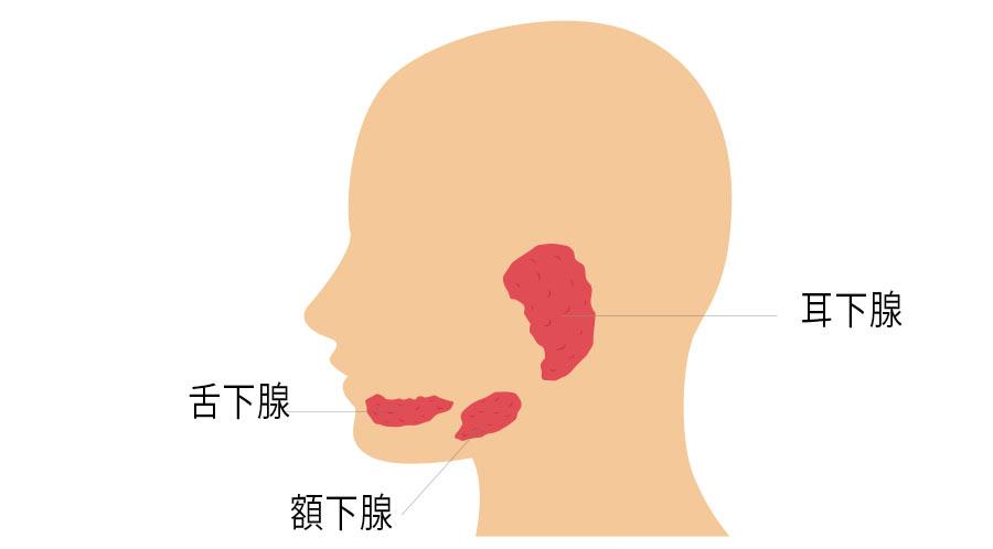唾液腺の疾患